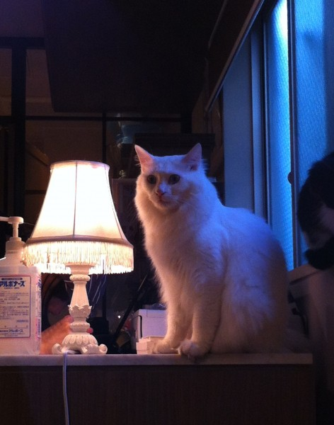cafe_calaugh_cat_stays_away
